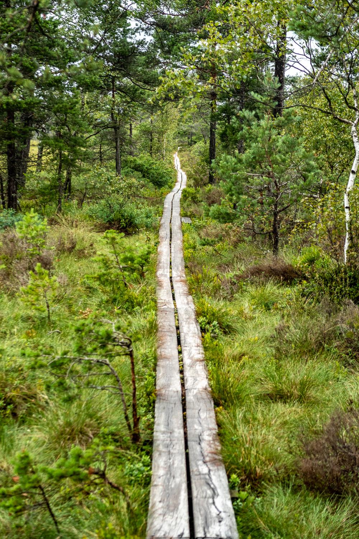 Välspångat genom Store Mosse nationalpark